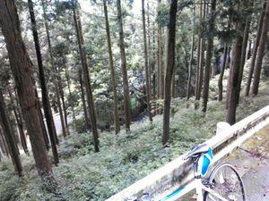 130803丹沢_008.jpg