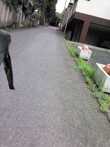 130803丹沢_021.jpg