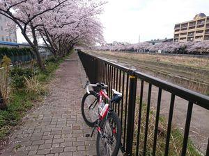 150402鎌倉011.jpg