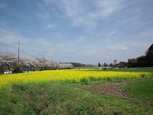12041saihoku_061.jpg