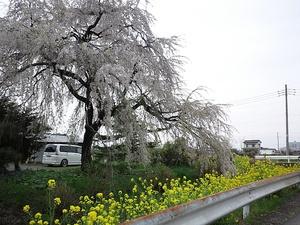 12041saihoku_065.jpg