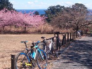 170211東伊豆自転車016.jpg
