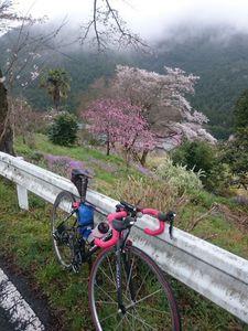 170408奥武蔵サイクリング027.jpg
