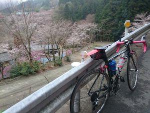 170408奥武蔵サイクリング033.jpg