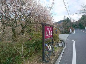 190314箱根1号線ツーリング026.jpg