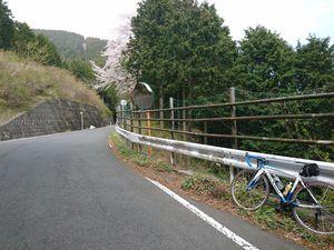 190420ヤビツ裏和田自転車002.jpg