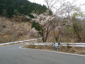 190420ヤビツ裏和田自転車006.jpg