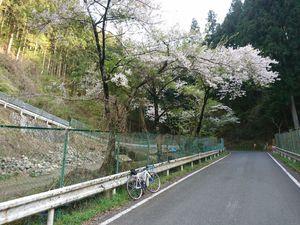 190420ヤビツ裏和田自転車015.jpg