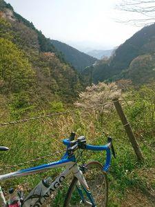 190420ヤビツ裏和田自転車016.jpg