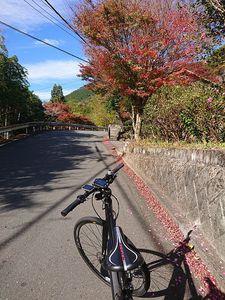 201128伊豆e-bike004.jpg