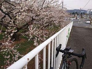 210212曽我梅林サイクリング008.jpg