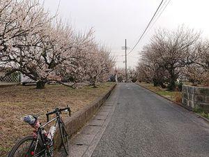 210212曽我梅林サイクリング009.jpg