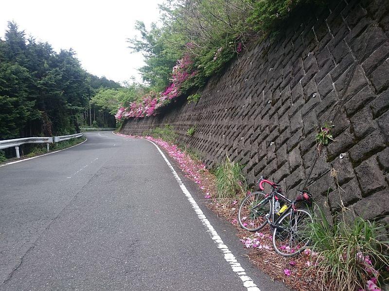 http://ayu2.com/Bicycle/bicphoto/170515002.jpg