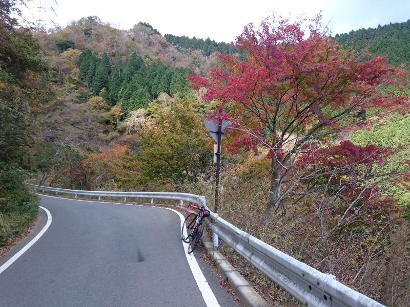 http://ayu2.com/Bicycle/bicphoto/171111V-2R%E3%83%A4%E3%83%93%E3%83%84026.jpg