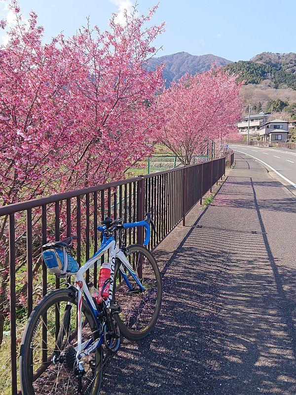 http://ayu2.com/Bicycle/bicphoto/210314%E3%83%A4%E3%83%93%E3%83%84002.jpg