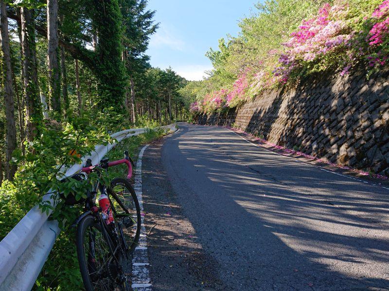 http://ayu2.com/Bicycle/bicphoto/210502%E3%83%A4%E3%83%93%E3%83%84003.jpg