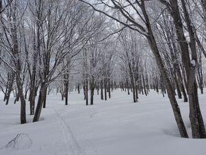 190428巻機山BCスキー028.jpg